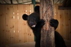 Αντέξτε cub στο κλουβί του ζωολογικού κήπου Στοκ φωτογραφία με δικαίωμα ελεύθερης χρήσης