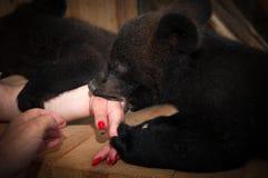 Αντέξτε cub στο κλουβί του ζωολογικού κήπου Στοκ φωτογραφίες με δικαίωμα ελεύθερης χρήσης