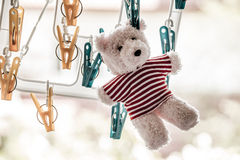 αντέξτε teddy Στοκ Φωτογραφία