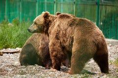 Αντέχει στο ζωολογικό κήπο Στοκ εικόνα με δικαίωμα ελεύθερης χρήσης