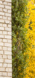 Αντίθεση, άσπρο τούβλο, κίτρινο και πράσινο φύλλωμα στοκ φωτογραφίες