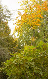 Αντίθεση φθινοπώρου στοκ εικόνες με δικαίωμα ελεύθερης χρήσης