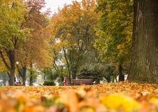 Αντίθεση φθινοπώρου στοκ φωτογραφίες