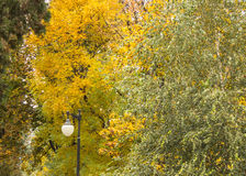 Αντίθεση φθινοπώρου Στοκ Φωτογραφία