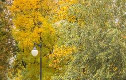 Αντίθεση φθινοπώρου στοκ εικόνα με δικαίωμα ελεύθερης χρήσης
