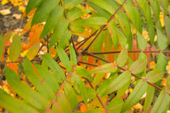 Αντίθεση φθινοπώρου στοκ εικόνες