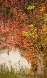 Αντίθεση φθινοπώρου Στοκ φωτογραφία με δικαίωμα ελεύθερης χρήσης