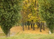 Αντίθεση φθινοπώρου στοκ εικόνα