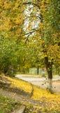 Αντίθεση φθινοπώρου στοκ φωτογραφίες με δικαίωμα ελεύθερης χρήσης