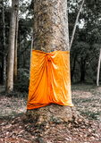Αντίστοιχος της Ταϊλάνδης για το μεγάλο παλαιό δέντρο Στοκ φωτογραφία με δικαίωμα ελεύθερης χρήσης