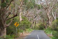 Αντίστροφο οδικό σημάδι καμπυλών στα σκεπτόμενα οδικό ταξίδι μεγάλα δέντρα γόμμας, Στοκ Εικόνες