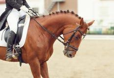 Ανταγωνισμοί εκπαίδευσης αλόγου σε περιστροφές Στοκ Φωτογραφίες