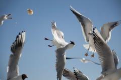 Ανταγωνιστικά Seagulls Στοκ εικόνα με δικαίωμα ελεύθερης χρήσης