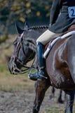 ανταγωνιστικός αναβάτης αλόγων Στοκ εικόνα με δικαίωμα ελεύθερης χρήσης