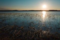 αντανάκλαση καλάμων λιμνών Στοκ φωτογραφίες με δικαίωμα ελεύθερης χρήσης