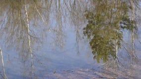 Αντανάκλαση στο νερό φιλμ μικρού μήκους