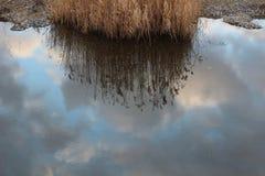 Αντανάκλαση του ουρανού στο νερό, σύννεφα στο νερό, ξηροί κάλαμοι Στοκ Εικόνες