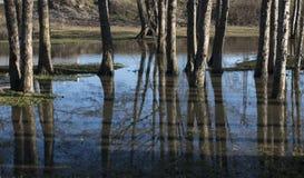 Αντανάκλαση των δέντρων στο νερό Στοκ φωτογραφία με δικαίωμα ελεύθερης χρήσης