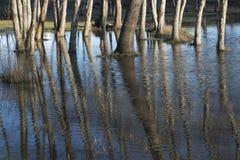 Αντανάκλαση των δέντρων στο νερό Στοκ εικόνα με δικαίωμα ελεύθερης χρήσης