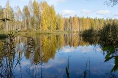 Αντανάκλαση των δέντρων φθινοπώρου Στοκ φωτογραφία με δικαίωμα ελεύθερης χρήσης