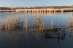 Αντανάκλαση των καλάμων στο νερό Στοκ Φωτογραφίες