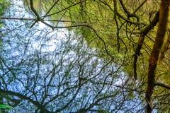 Αντανάκλαση των κλάδων δέντρων Στοκ εικόνα με δικαίωμα ελεύθερης χρήσης