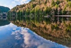 Αντανάκλαση Lake Forest της Alice στοκ φωτογραφία