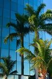 αντανάκλαση palmtree Στοκ εικόνες με δικαίωμα ελεύθερης χρήσης
