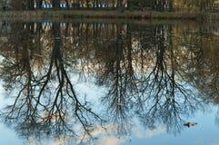 Αντανάκλαση, δέντρο, νερό, λίμνη Στοκ Φωτογραφίες