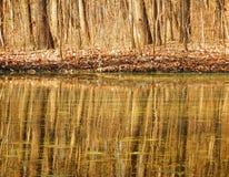 Αντανάκλαση δέντρων στο νερό Στοκ Εικόνες