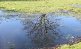 Αντανάκλαση δέντρων Στοκ Εικόνες
