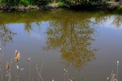 Αντανάκλαση ενός δέντρου στο νερό Στοκ εικόνα με δικαίωμα ελεύθερης χρήσης