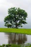 Αντανάκλαση ενός δέντρου Στοκ φωτογραφία με δικαίωμα ελεύθερης χρήσης