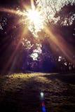 Αντανάκλαση ηλιοφάνειας Στοκ φωτογραφίες με δικαίωμα ελεύθερης χρήσης