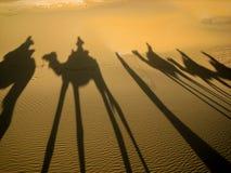 Αντανάκλαση καμηλών στην άμμο στο ηλιοβασίλεμα, έρημος Σαχάρας, Μαρόκο Στοκ Εικόνες