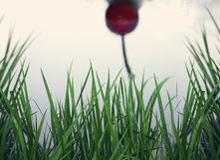 Αντανάκλαση κουταλιών κερασιών Στοκ εικόνες με δικαίωμα ελεύθερης χρήσης