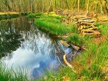 Αντανάκλαση νερού σε μια λίμνη Στοκ εικόνες με δικαίωμα ελεύθερης χρήσης