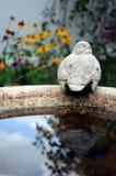 Αντανάκλαση λουτρών πουλιών Στοκ φωτογραφία με δικαίωμα ελεύθερης χρήσης