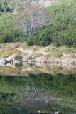 Αντανάκλαση στην επιφάνεια του pleso Rohacske λιμνών βουνών σε Roháče, δυτικό Tatras Στοκ Εικόνες