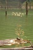 Αντανάκλαση στη λίμνη στοκ φωτογραφία