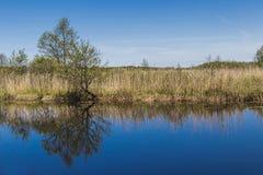 Αντανάκλαση στον ποταμό Στοκ Εικόνα