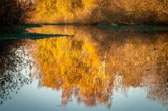 Αντανάκλαση στον υγρότοπο το φθινόπωρο στοκ εικόνα με δικαίωμα ελεύθερης χρήσης