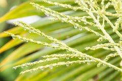 Αντανάκλαση της πρασινάδας στη μεγάλη σταγόνα βροχής Στοκ Εικόνες
