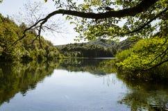 Αντανάκλαση του δάσους πέρα από το νερό λιμνών ` s στη λίμνη Plitvice Στοκ εικόνα με δικαίωμα ελεύθερης χρήσης