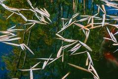 Αντανάκλαση του μπαμπού στην επιφάνεια νερού στο ασιατικό ύφος της Zen Στοκ εικόνες με δικαίωμα ελεύθερης χρήσης