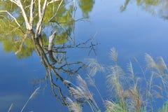 Αντανάκλαση των δέντρων στα κύματα καθαρού νερού Στοκ εικόνα με δικαίωμα ελεύθερης χρήσης