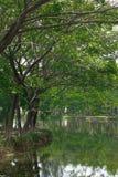 Αντανάκλαση των δέντρων στη λίμνη Στοκ Εικόνα