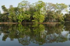 Αντανάκλαση των δέντρων στη λίμνη Στοκ φωτογραφία με δικαίωμα ελεύθερης χρήσης