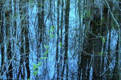 Αντανάκλαση των δέντρων Στοκ Εικόνα
