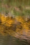 Αντανάκλαση των λουλουδιών στο νερό Στοκ Φωτογραφία